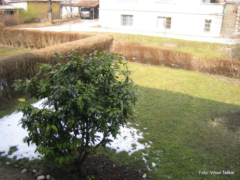 Druzinski-vrtovi-Atrijski-vrt_2