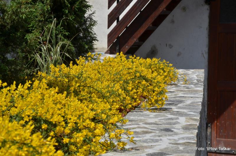 Druzinski-vrtovi-Kamniti-atrijski-vrt_8