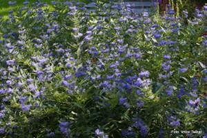 Druzinski-vrtovi-Prava-lepota-je-v-majhnih-vrtovih_22