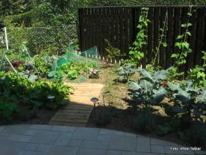 Zelenjavni-vrt-v-mestu_6